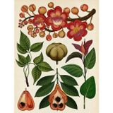 Botanicum ENG