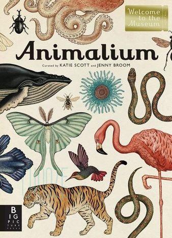 Animalium ENG