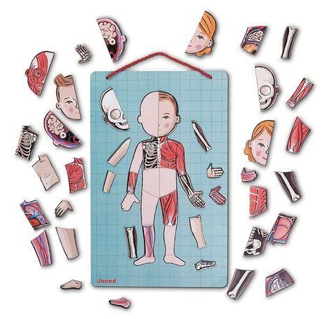 Janod Magnetická tabuľa - Ľudské telo